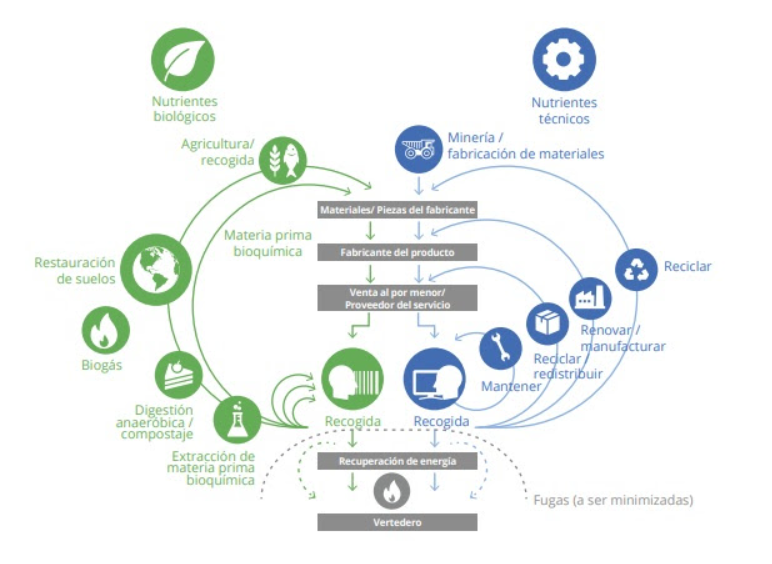 Economía circular vs economía lineal